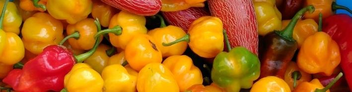 Capsaicin, the heat in your pepper