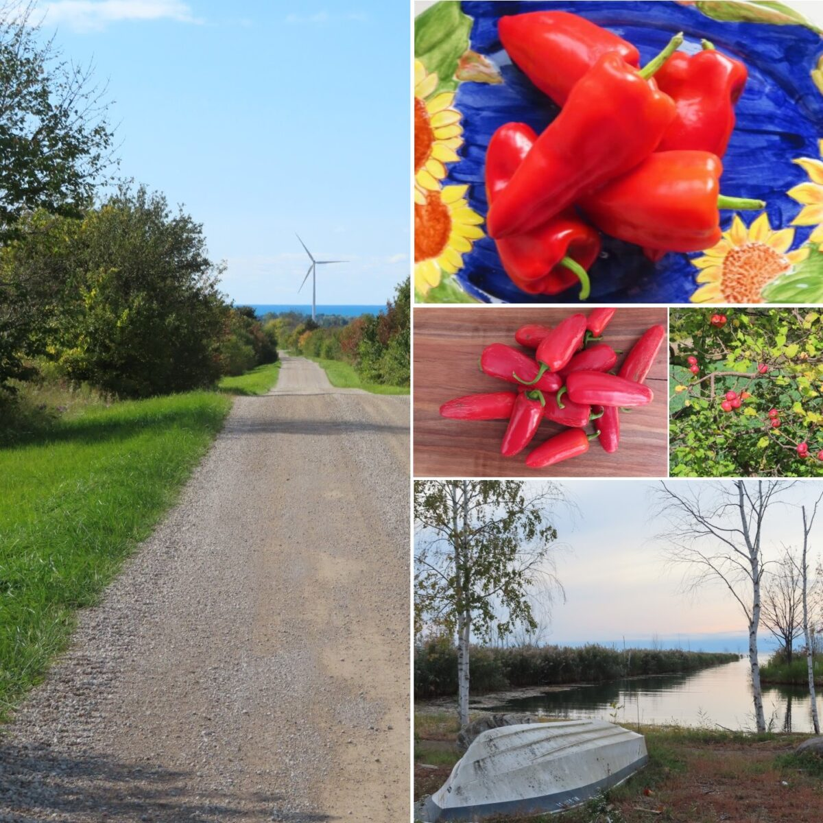 Autumn update from Bluewater Pepper Farm