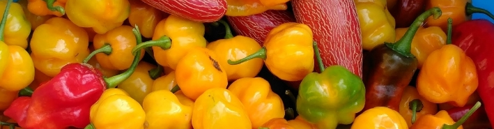 New Products from Bluewater Pepper Farm